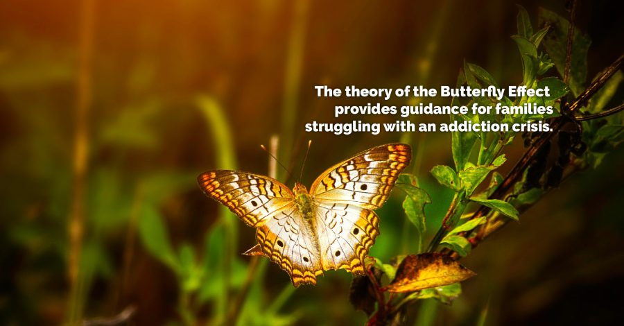 The Butterfly Effect: Guidance for Families – Thursday Thought